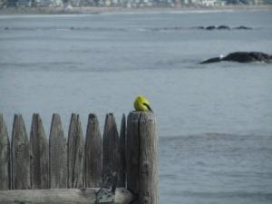 geel propje op schutting