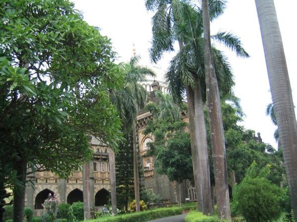 mumbai palmen