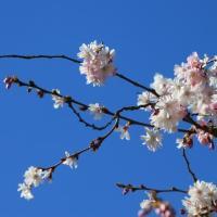 Het is lente, de knopjes zitten aan de bomen