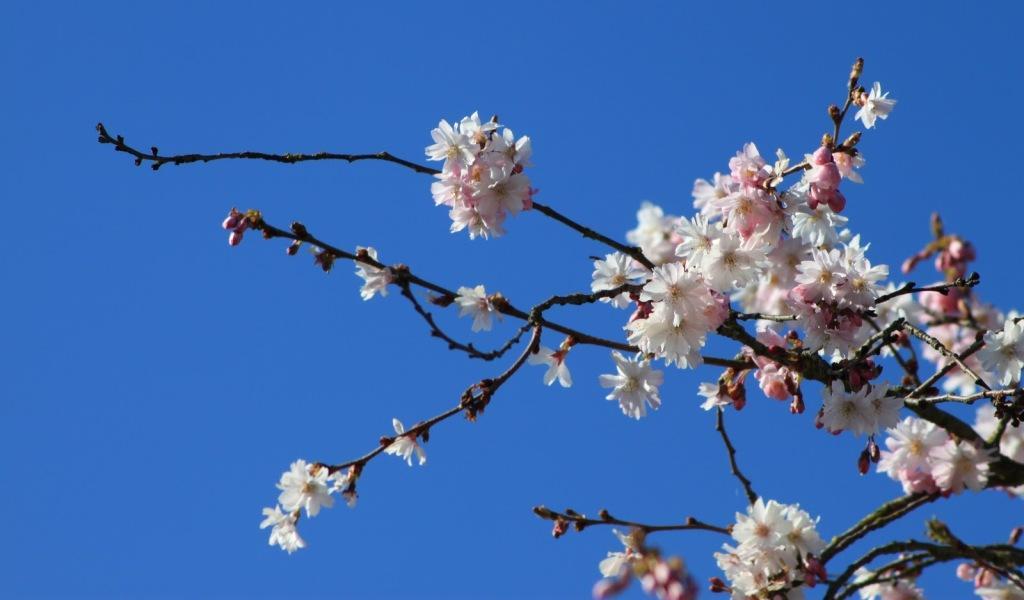 Het is lente, de knopjes zitten aan debomen