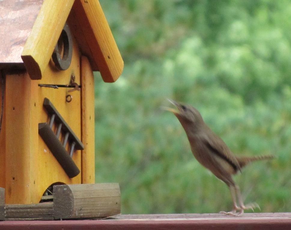 Die vogels die zitten weer klaar in 'tstruweel