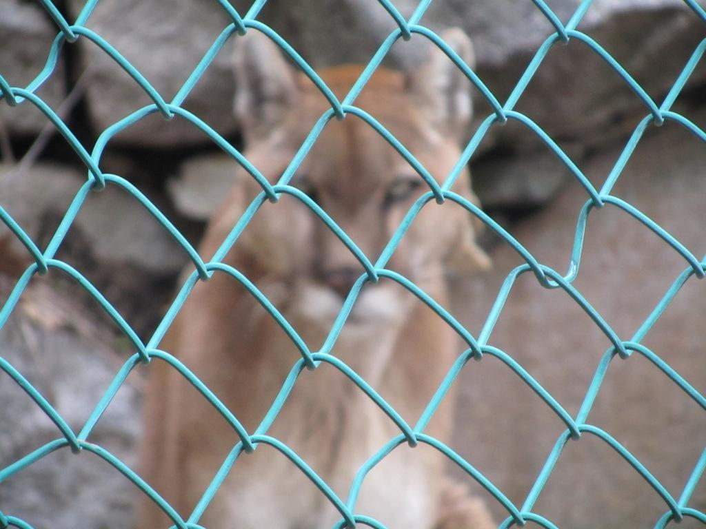 Weekly Photo Challenge: unfocused (1) Life Sentence