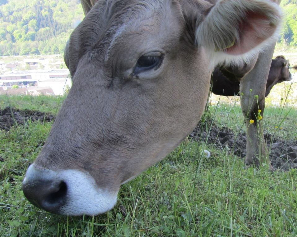 Het is moederdag dus ik dacht kom ik zet er eens wat koeienop