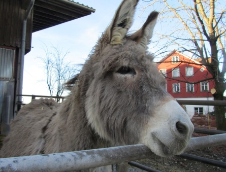 ©2012 Apiedapie, Untereggen