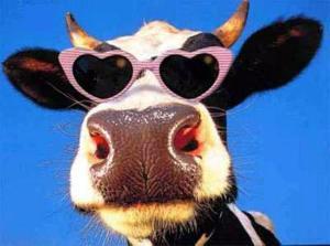 jdw koe