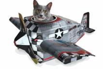 vliegtuigkat