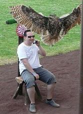 roofvogel op fuerteventura