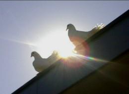 ilona duiven