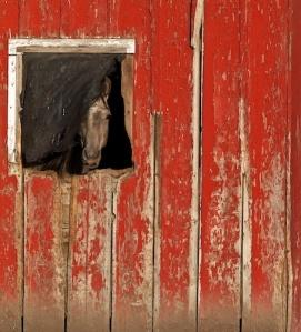 Curiosity, Mary Lee Dereske  http://maryleedereske.artistwebsites.com/featured/curiosity-mary-lee-dereske.html
