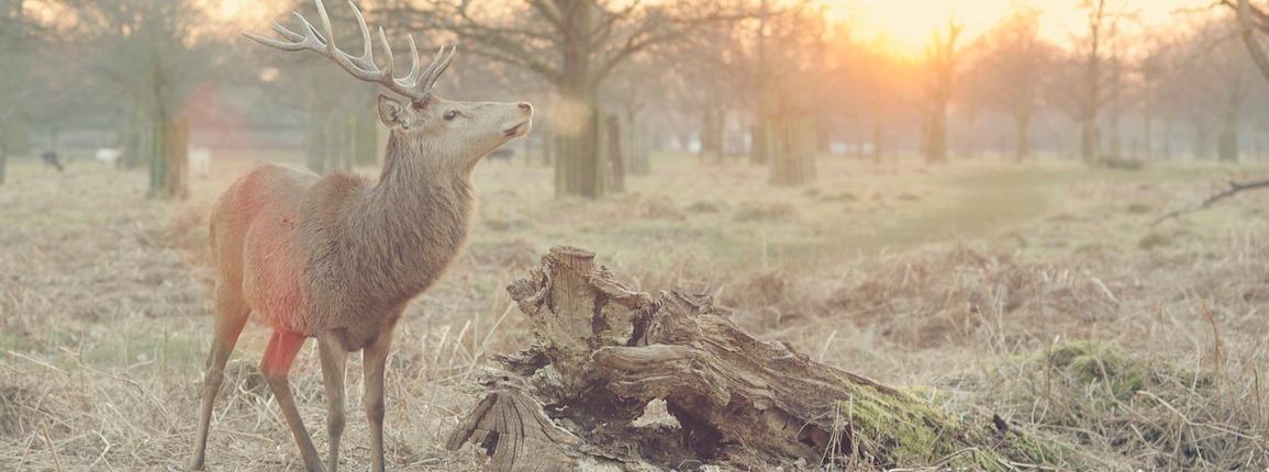 In Wildebeestenland leer je relativeren(79)