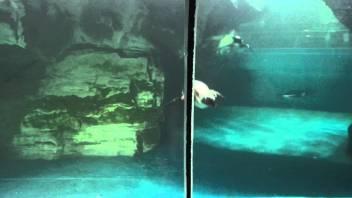 langkawi aquarium