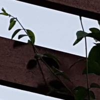 Wat ik vind van de kolibrie